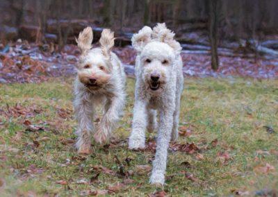 Hugo & Fia running