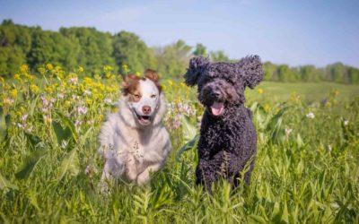 Piper and Oso Summer Time Prairie Time Fun!